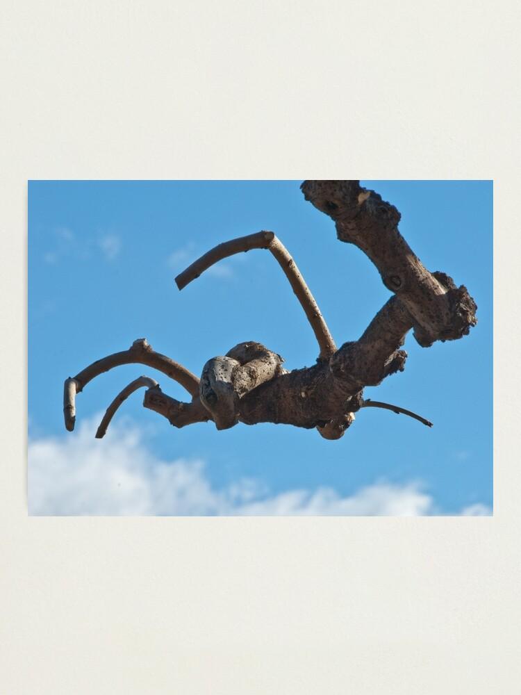 "Alternate view of ""Spider"", Bolzano/Bozen, Italy Photographic Print"