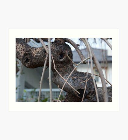 Animal Head in Tree Branch, Bolzano/Bozen, Italy Art Print