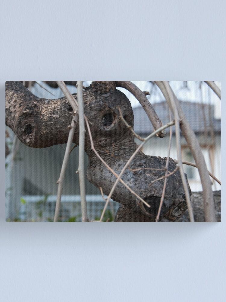 Alternate view of Animal Head in Tree Branch, Bolzano/Bozen, Italy Canvas Print