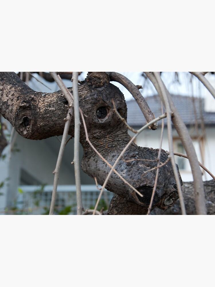 Animal Head in Tree Branch, Bolzano/Bozen, Italy by leemcintyre
