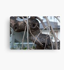 Animal Head in Tree Branch, Bolzano/Bozen, Italy Canvas Print