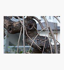 Animal Head in Tree Branch, Bolzano/Bozen, Italy Photographic Print