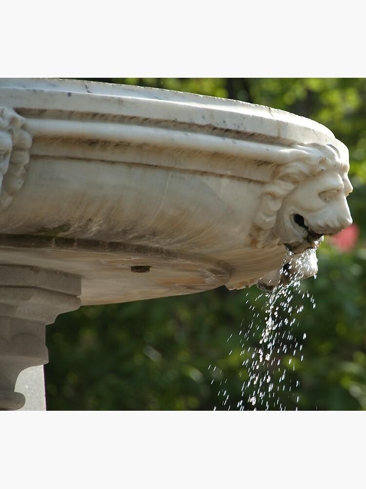LIon Head Fountain, Piazza Walther, Bolzano/Bozen, Italy by leemcintyre