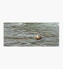 Heading Upstream, Talvera River, Bolzano/Bozen, Italy Photographic Print
