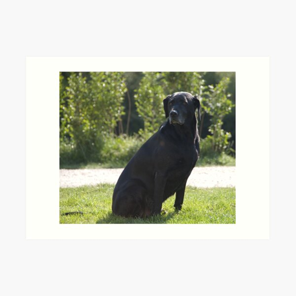 Black Dog, near Talvera River, Bolzano/Bozen, Italy Art Print