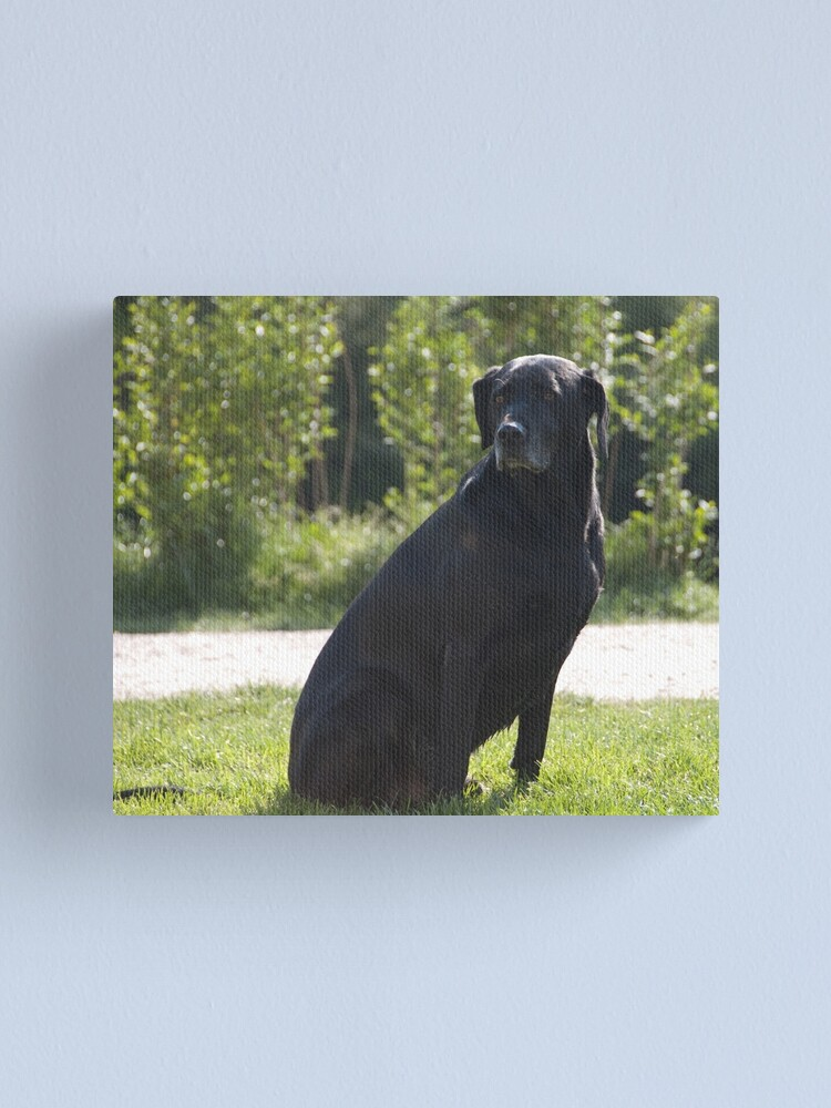 Alternate view of Black Dog, near Talvera River, Bolzano/Bozen, Italy Canvas Print