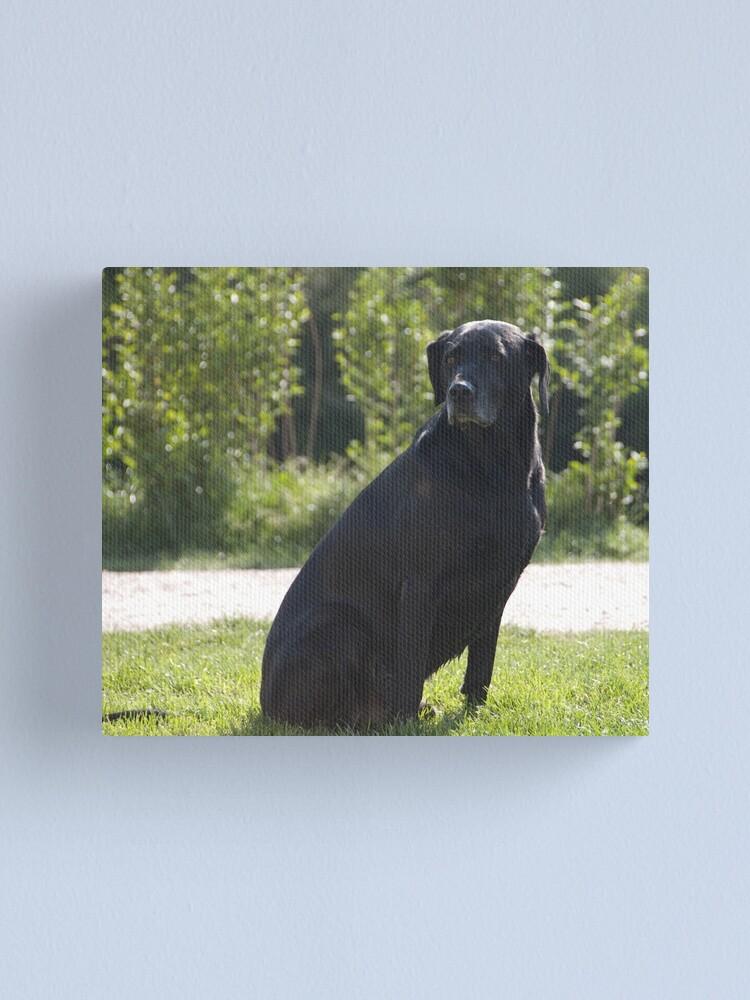 Alternate view of Black Dog, near Talvera River, Bolzano/Bozen, Italy Canvas Print