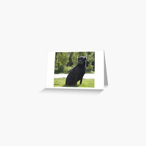 Black Dog, near Talvera River, Bolzano/Bozen, Italy Greeting Card
