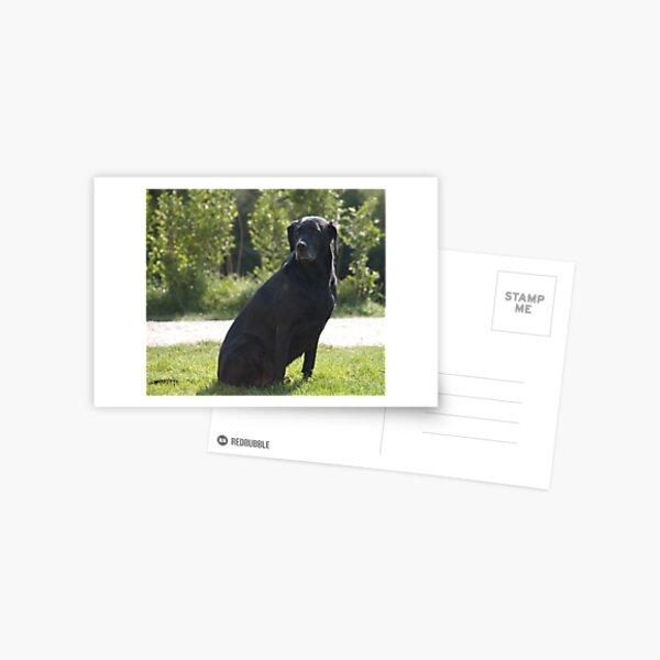 Black Dog, near Talvera River, Bolzano/Bozen, Italy Postcard