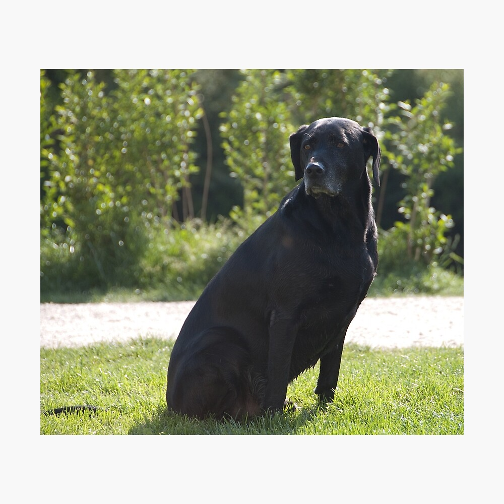 Black Dog, near Talvera River, Bolzano/Bozen, Italy Photographic Print