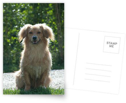 Little Dog, near Talvera River, Bolzano/Bozen by L Lee McIntyre