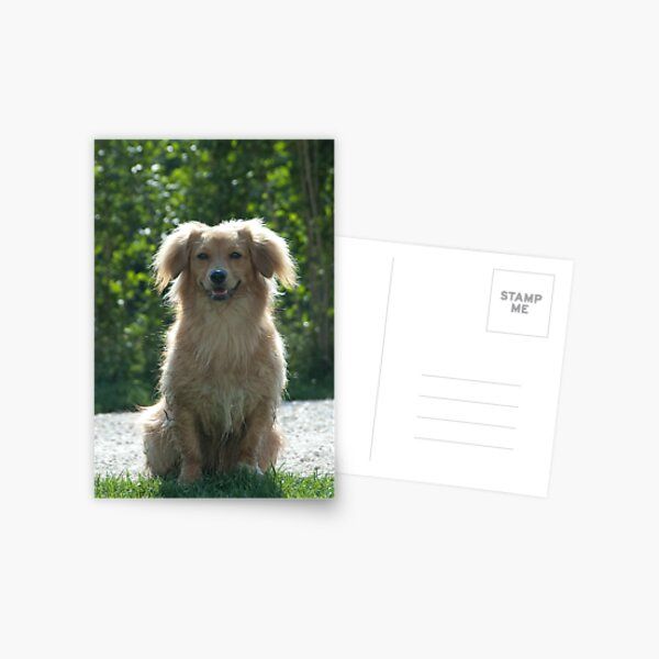 Little Dog, near Talvera River, Bolzano/Bozen Postcard