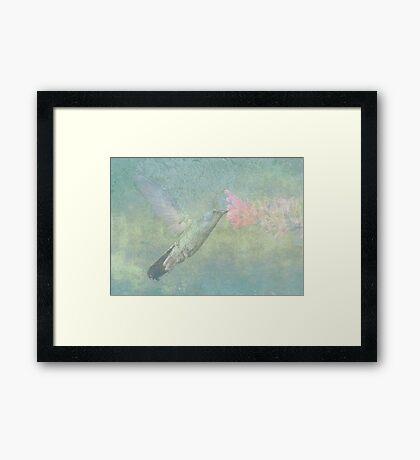Hummingbird Tune Framed Print