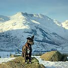 Tarn the Terrier... By Bow Fell by Jamie  Green