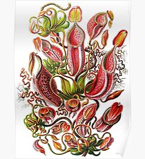 Plants & Animals, carnivorous, pitcher plants, tropical, Nepenthes, psychedelic, art, illustration, haeckel,  Poster