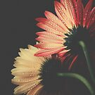 Two daisies by Ingrid Beddoes