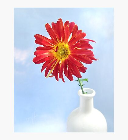 Gerbera Daisy in a White Vase Photographic Print