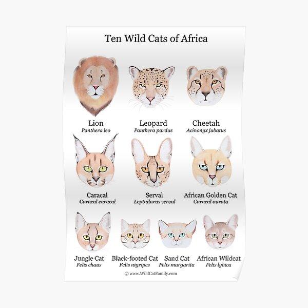Ten Wild Cats of Africa Chart Poster