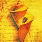 Spiral Study I - Thatcheria by lastgasp