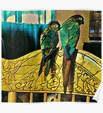 Roosting Conures Poster