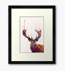 Red Deer Framed Print