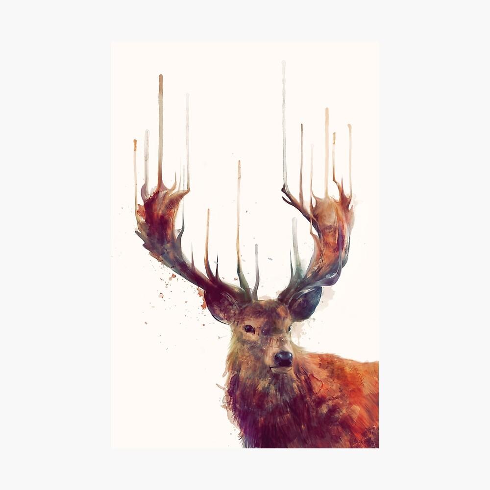 ciervo rojo Lámina fotográfica