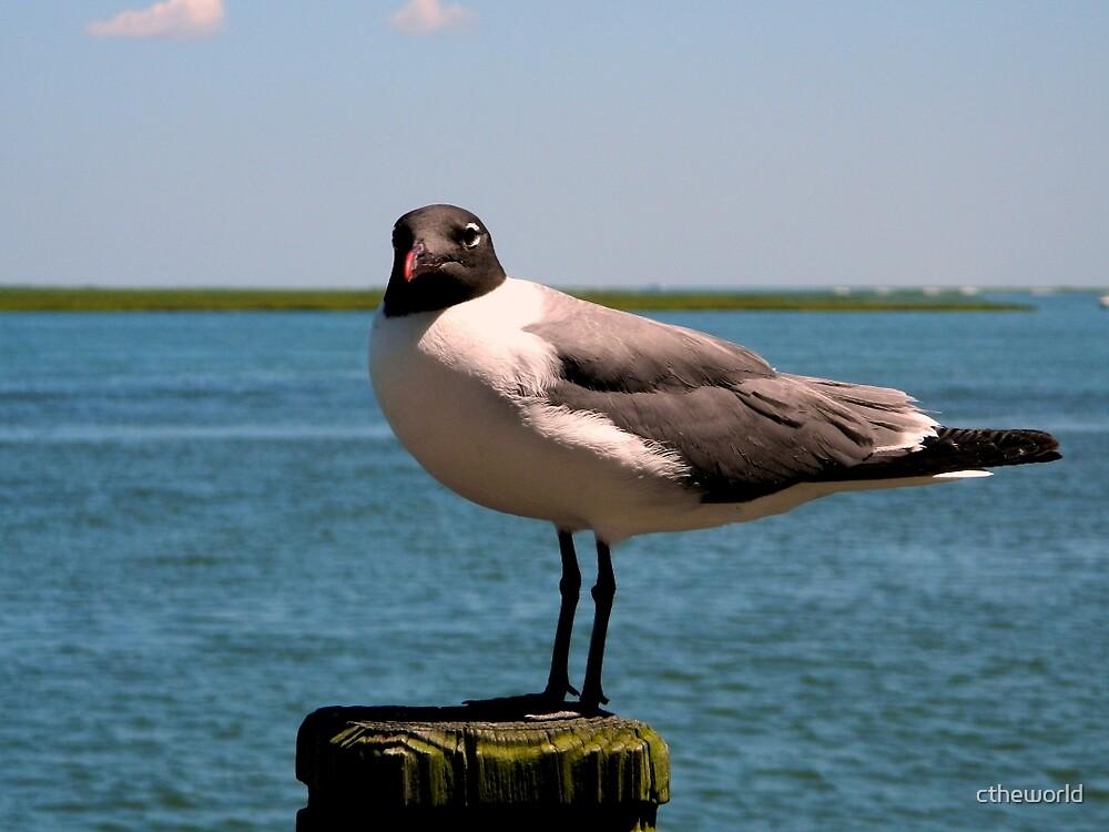Seabird / See Bird !    ^ by ctheworld