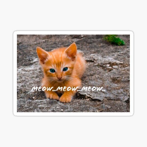 Meow…Meow.. Meow Sticker