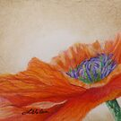 Poppy Solo by Lisa Gibson