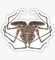 Amblypygi Sticker