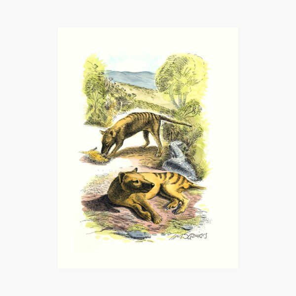 Two Thylacines Art Print