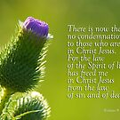 No Condemnation - Freedom ~ Romans 8:1,2 by Robin Clifton