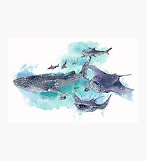 Star Sharks and Rays Photographic Print