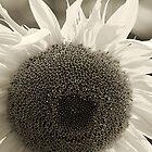 Sunny Acquaintance by sundawg7