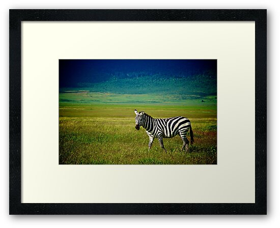 Zebra by Andy Hughes