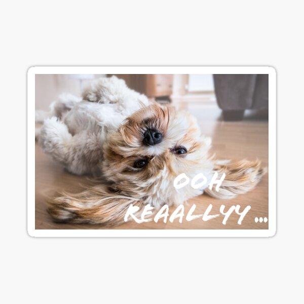 Cute Fluffy White and Brown Puppy - with litt' attitude Sticker