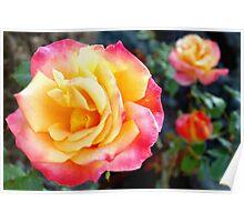 Rose color trio Poster