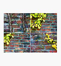 Photo collage of stone wall backgrounds with ivy leaves Photographic Print