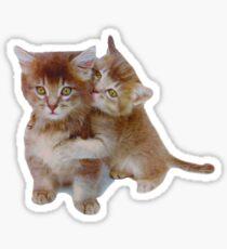 Love Kittens Sticker