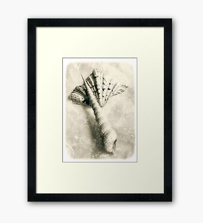 Sea Shells #6 Framed Print