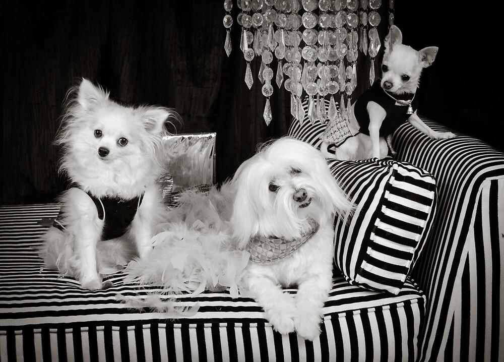 Doggies of Leisure by Johanne Brunet