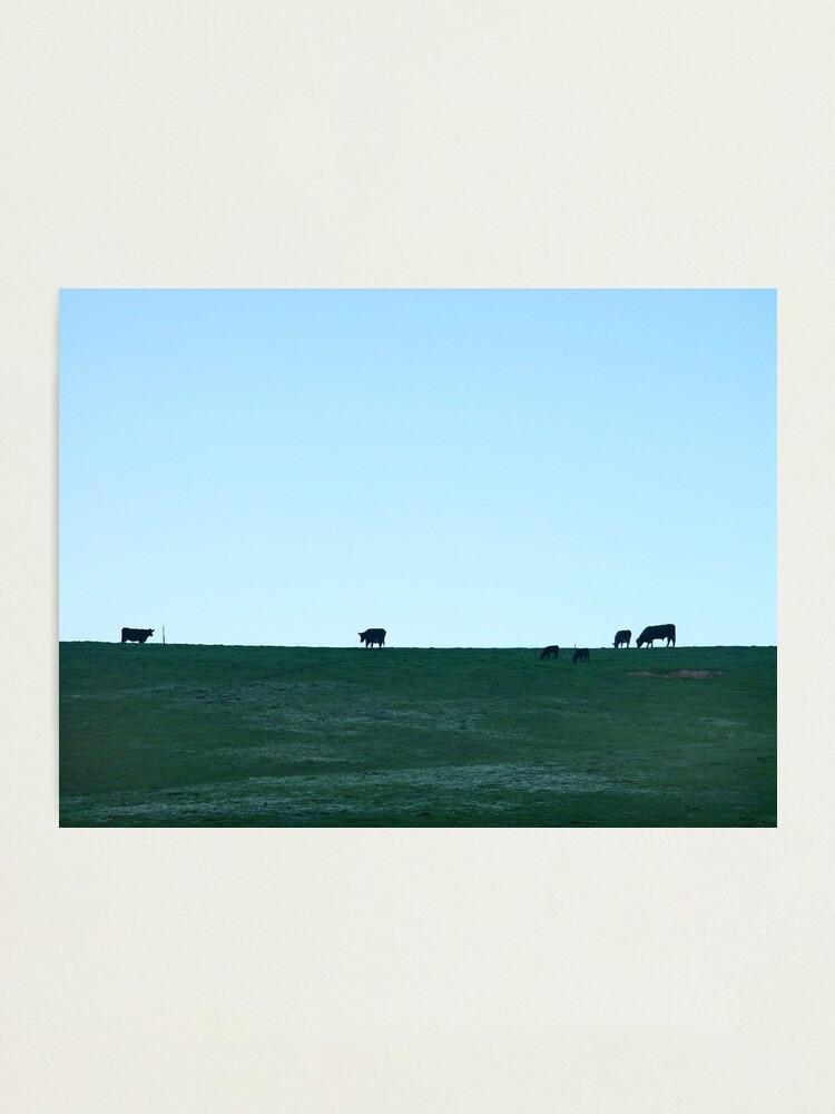 Alternate view of Grazing Photographic Print