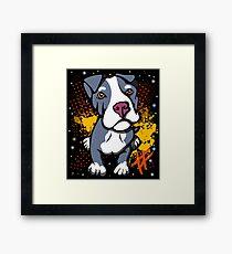 Blue Pit Bull Pup  Framed Print