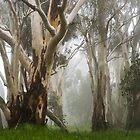 Feeling Misty by Andrew Dickman