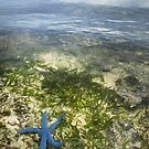 Starfish Shallows - Pohnpei, Micronesia by Alex Zuccarelli