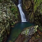 Jewel of the Rainforest - FNQ by Mark Shean