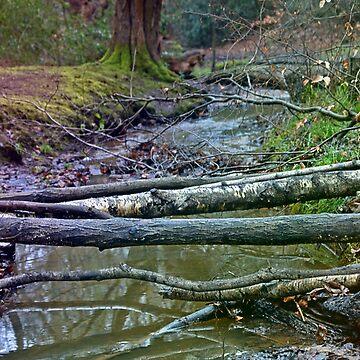 Broken Trees by StevenARTify