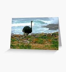 Ostrich, Cape Point Nature Reserve, South Africa Greeting Card