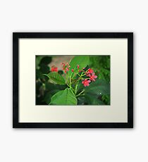 Pink Flowers and buds Framed Print