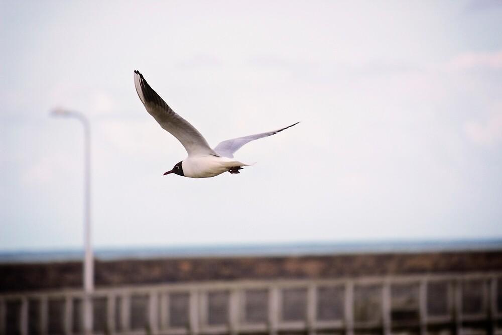 Flying Visit by Vicki Field